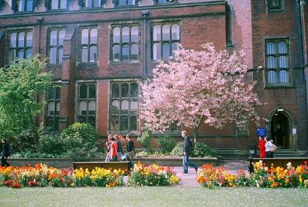 Newcastle Blossom