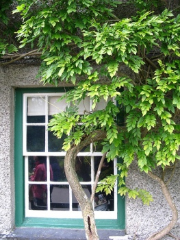LAN_window_grey_green
