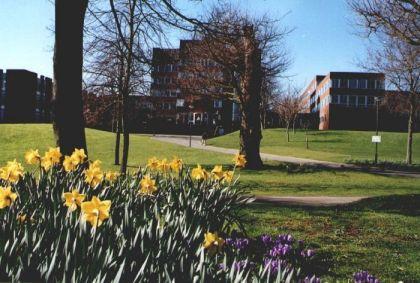 University_of_Sussex_Campus_1
